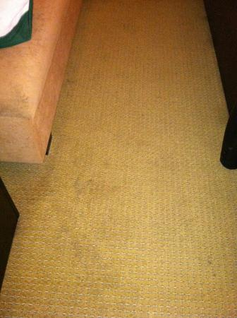 Livingston, NJ: Disgusting stained rug and settee