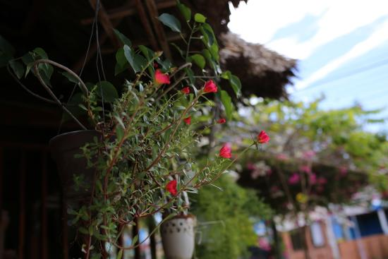 Duy An Guest House : Flowers