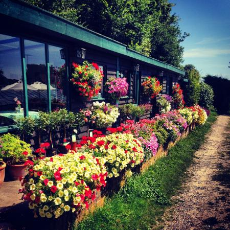 Dingle Hill Tearooms: Our Summer Plant Display