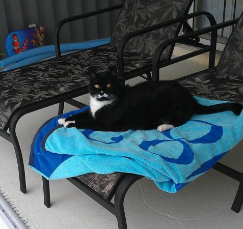Rotonda West, FL: Pets are welcome!!