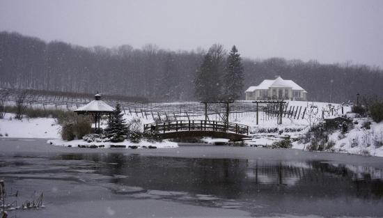 Beamsville, Canada: Our pond and property are gorgeous for wintertime engagement photos!