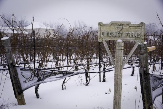 Beamsville, Canada: Sshhhhh...our vines are asleep for the winter...