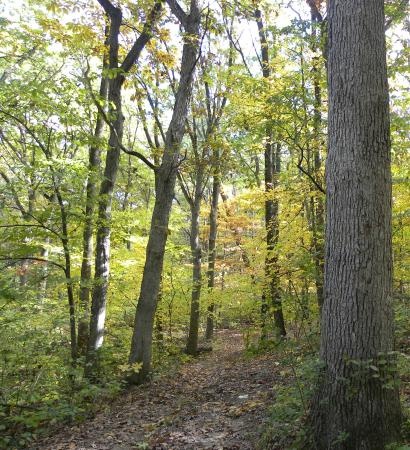 Lake Geneva Canopy Tours 9 Miles Of Arbor Trails Available For Hiking Mountain
