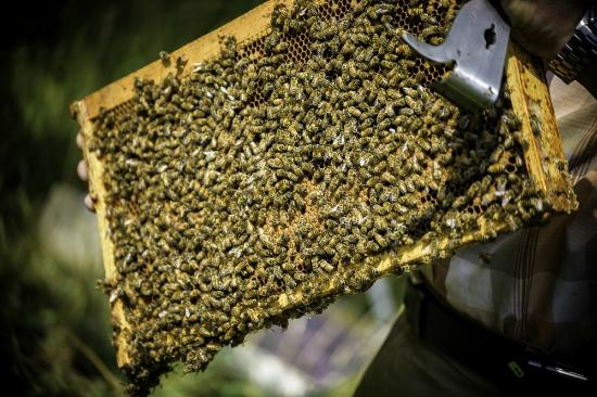 Beamsville, Canada: We're owned by a multigenerational bee-keeping family and have 250 active beehives
