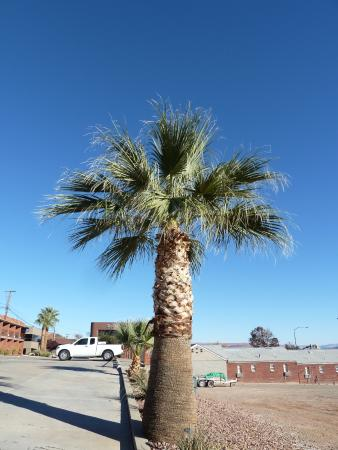 palm trees around property picture of best western coral hills st rh tripadvisor com