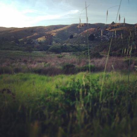 Muir Beach, แคลิฟอร์เนีย: View of the valley
