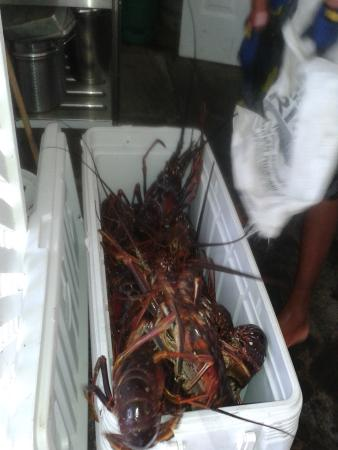 Friendship, Bequia: Tomorrow's lobster barbeque arrives from five minutes out in the bay!