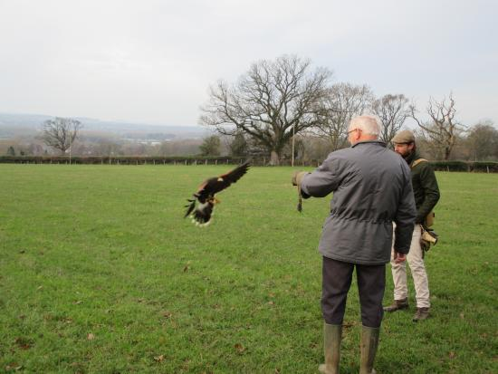 Llangynhafal, UK: Swooping in