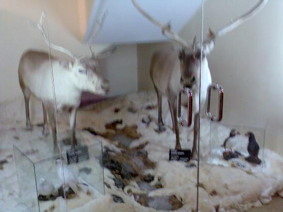 Chilches, Spain: PEQUEÑA EXPOSICION EN LAS PLANTAS ANTES