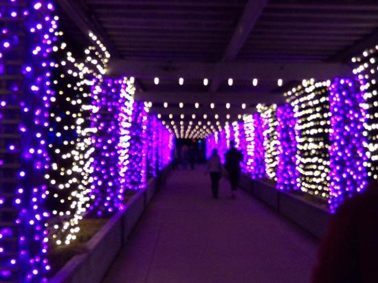 Denver Botanic Gardens: Tunnel Of Lights