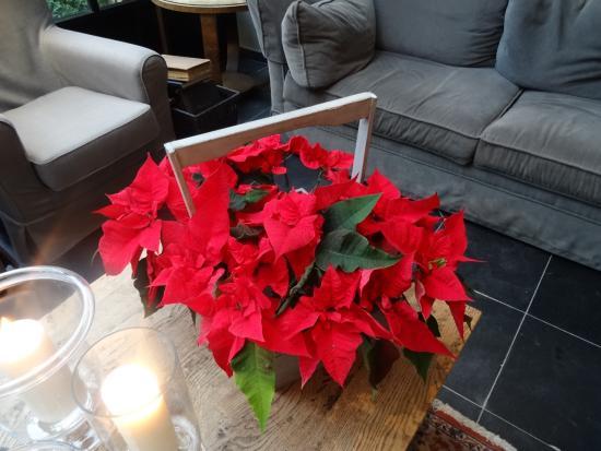 Hotel Ter Duinen: Christmas Poinsettia
