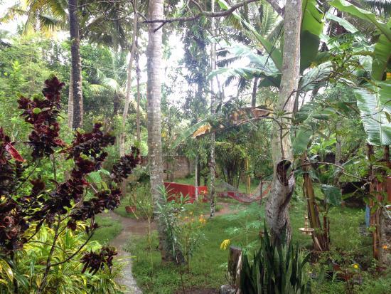 Sharanagati Yogahaus : Garden