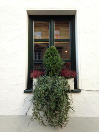 Augsburger Hof: Hotel Window...Cute Greenery
