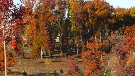 Springfield, MA: Foliage