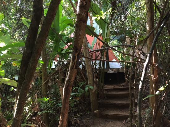 Palma Quemada, Costa Rica: photo1.jpg