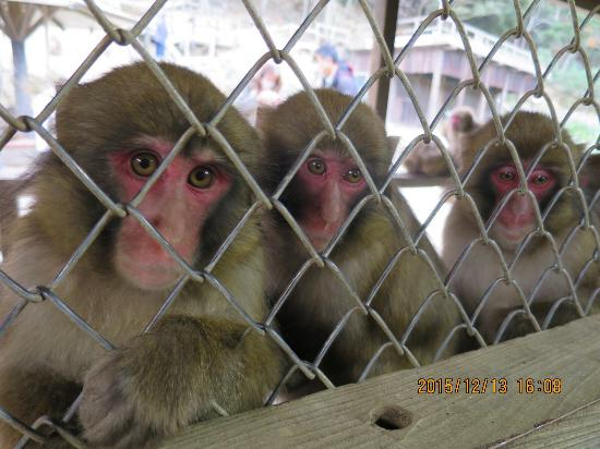 Awajishima Monkey Center: photo2.jpg