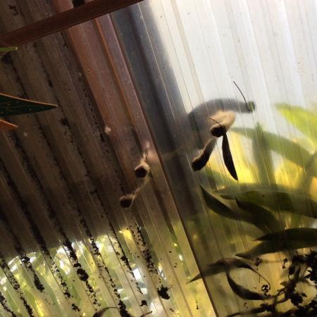 Villa Lotos: Прозрачная крыша только в открытой прихожей, не волнуйтесь)