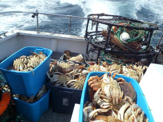 And more crabs picture of captain s reel deep sea for Deep sea fishing newport