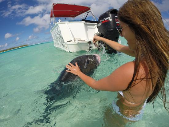 Even the locals are friendly, Wet & Wild Aitutaki