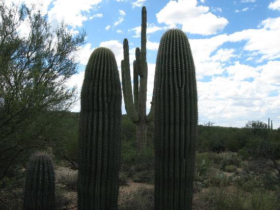 Saguaro East Picture of Rincon Mountain Visitor Center Tucson