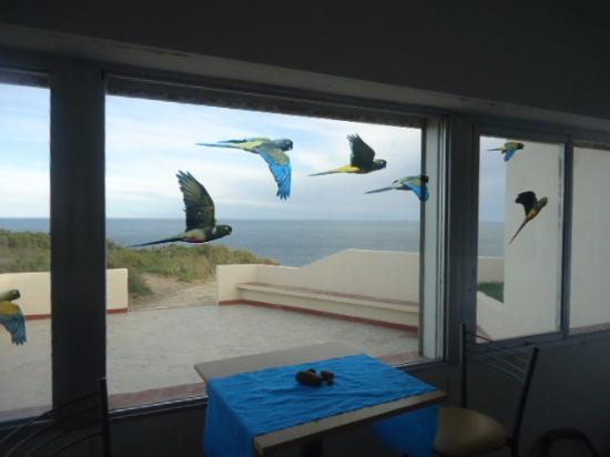 Resultado de imagen para Punta Bermeja/La Lobería
