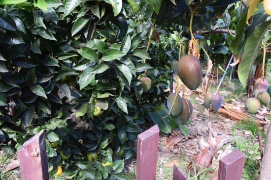 Jardín de Frutas Tropicales