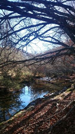 Montejo de la Sierra, İspanya: El Jarama ente robles