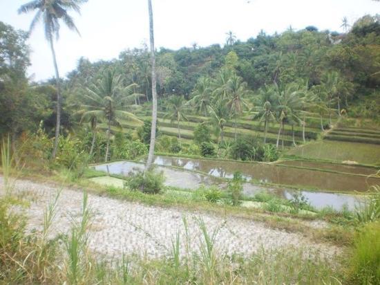 Rini Hotel: Uitzicht rijstvelden