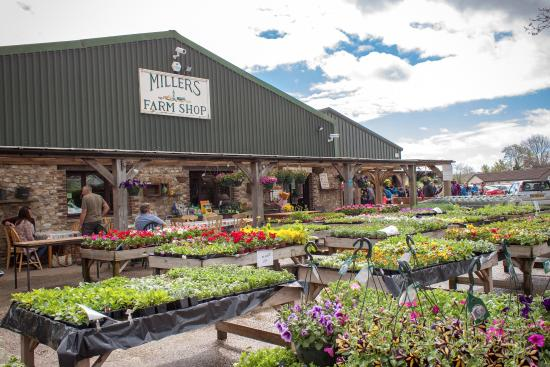 Axminster, UK: Millers Farm Shop