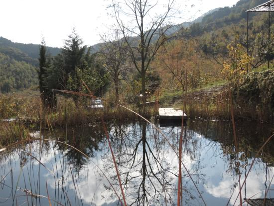 Mas Ardèvol: Teich neben Mas Ardevol