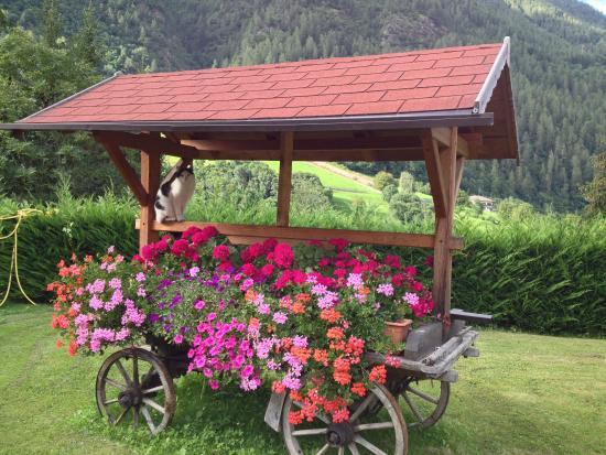 Hotel Genzianella: Carro addobbato di fiori