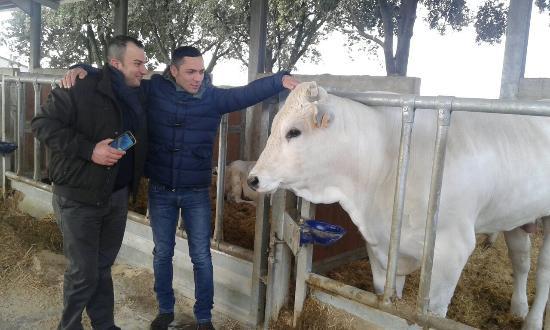 Collazzone, Italia: Fattoria Luchetti