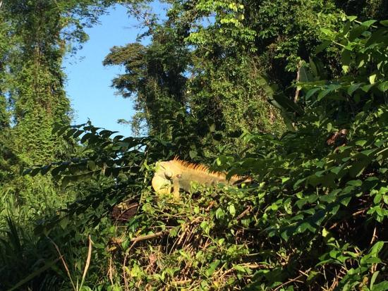 Jungle Tom Safaris Day Tours: photo5.jpg