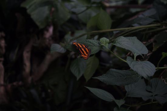 Butterfly picture of casa delle farfalle e bosco delle for Piani casa delle fate