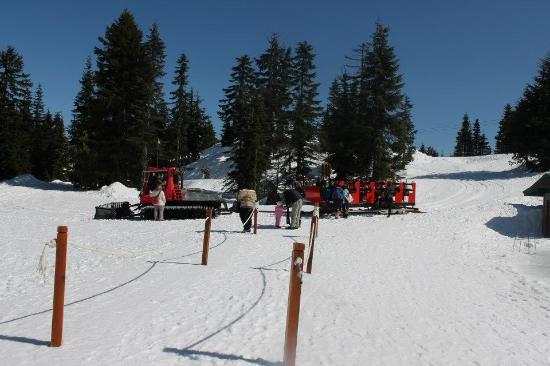 Grouse Mountain Ziplines BC Sleigh Ride