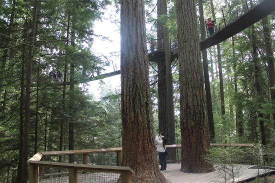 North Vancouver, Canadá: Walking through the treetops