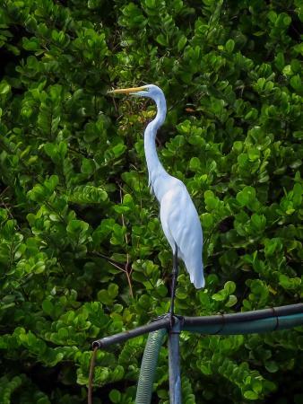 Озеро Никарагуа, Никарагуа: waterbird