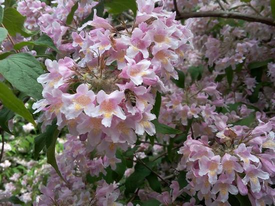 Esplosione di fiori picture of parco giardino sigurta - Fiori di giardino ...