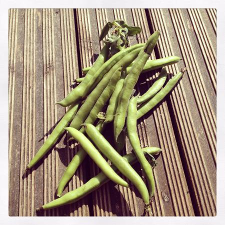 Windmill Hill City Farm : Beans from the allotment