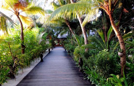 Baa Atoll: Garden walk