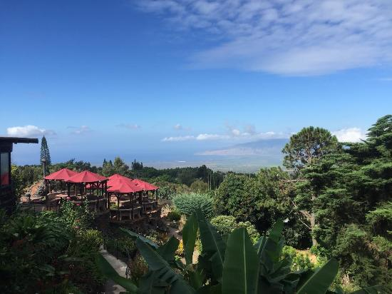 Kula Lodge: view of the grounds