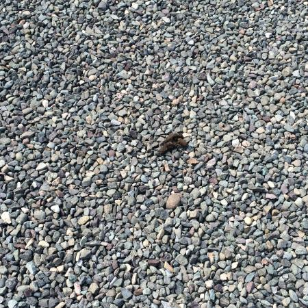 Cocomar Beachfront Hotel and Island Resort: Dog poop in parking lot