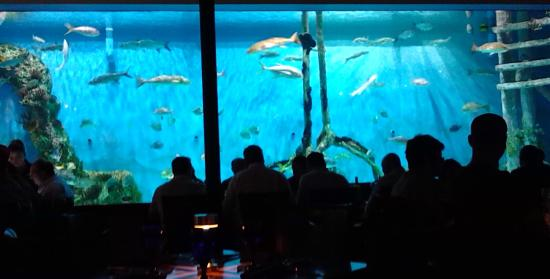 Rumfish Grill The Giant Aquarium