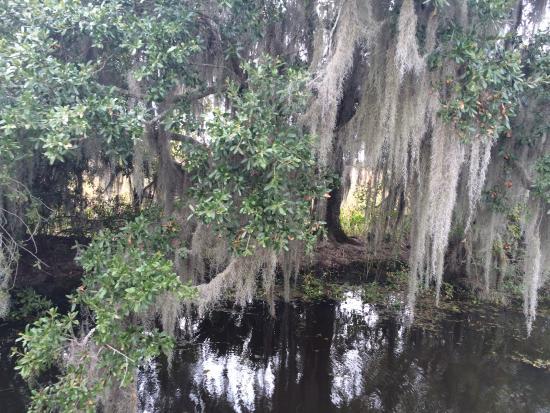 Grey Line New Orleans Swamp Tour