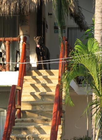 Nuestra Casa-Sai : Astro, saliendo de su habitación.