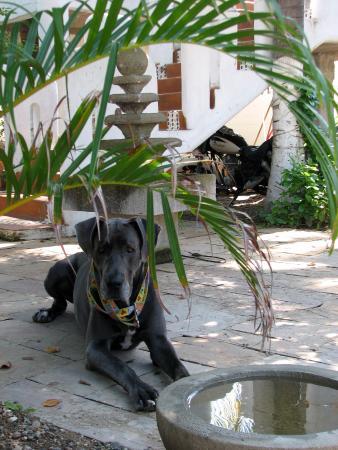 Nuestra Casa-Sai : Astro, descansando cerca de la alberca.