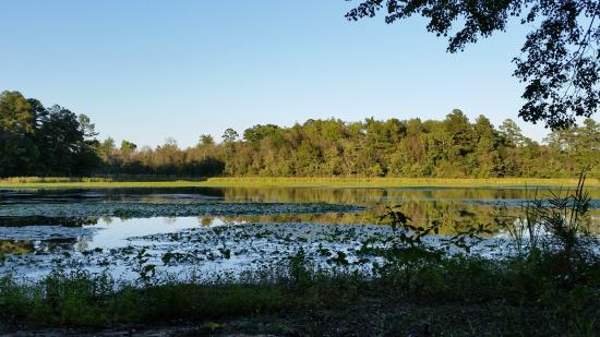 Little Pee Dee State Park: View from our campsite