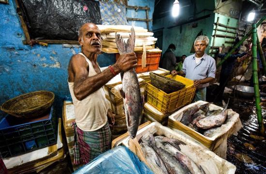 Wholesale fish market picture of calcutta photo tours for Wholesale fish market