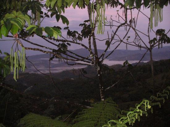 Rio Magnolia Nature Lodge: View of the valley at sunrise through the Cecropia trees