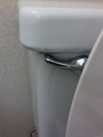 Hilton Garden Inn Jacksonville JTB / Deerwood Park: Poop